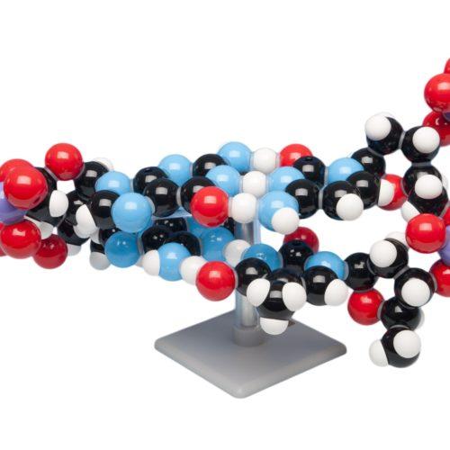 NABLA-BIO-DNA2